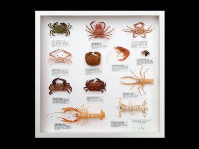 Marine Crustaceans of Europe