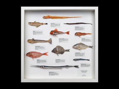 Marine Fish of Europe 2