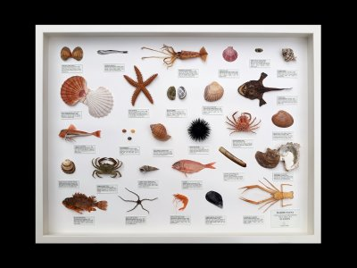 Marine Fauna of Europe 2