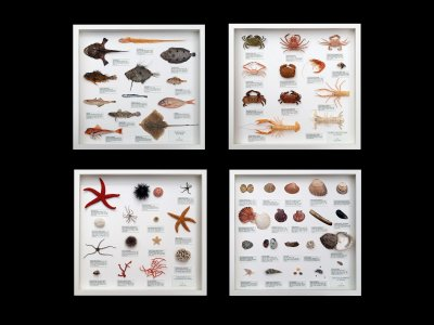 Marine Fauna of Europe - set