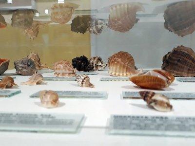 Gastropod Seashells
