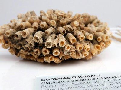 Koralji